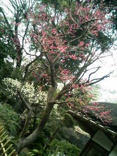 上野動物園12