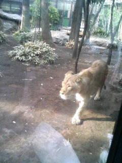 上野動物園13