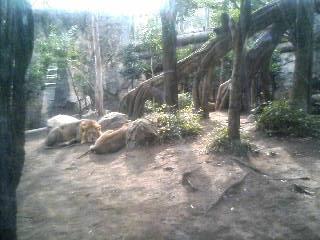 上野動物園14