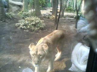 上野動物園15