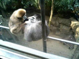 上野動物園17