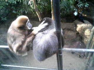 上野動物園19