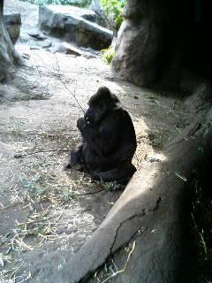 上野動物園22