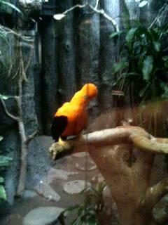 上野動物園24