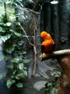上野動物園25
