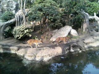 上野動物園26