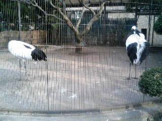 上野動物園28
