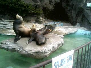 上野動物園42