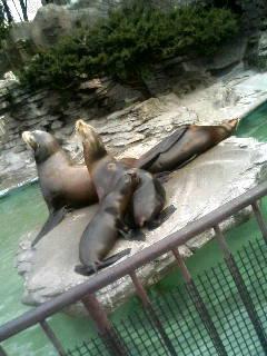 上野動物園44