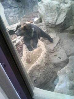 上野動物園49