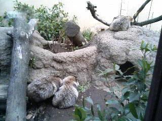 上野動物園51