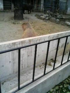 上野動物園58