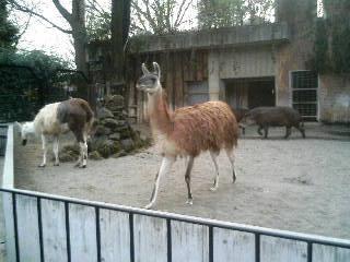 上野動物園59
