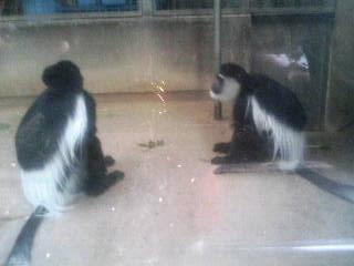上野動物園61