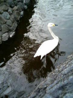 上野動物園71