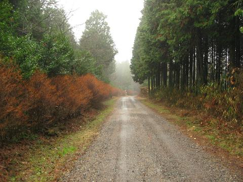 槙ヶ根付近の旧道
