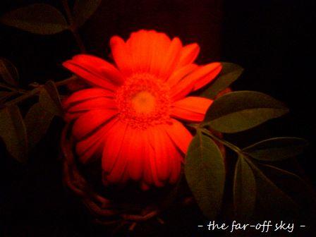 2009-10-14-02.jpg