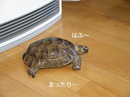 071216_ima2.jpg