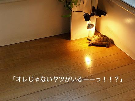 071216_ima3.jpg