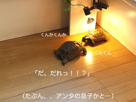 071216_ima7.jpg