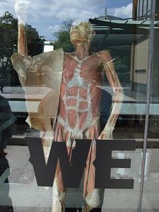 人体標本1