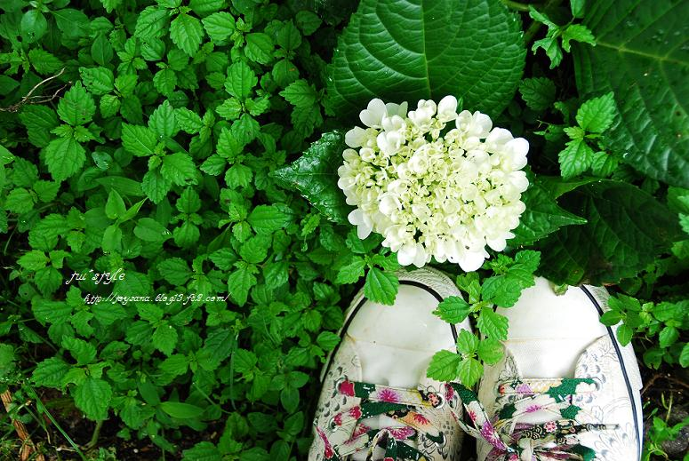 DSC_000601_20110712220918.jpg