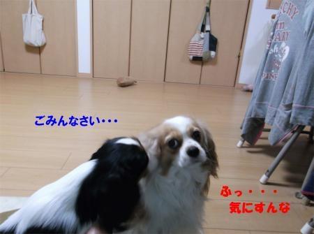 006_convert_20120217170605[1]