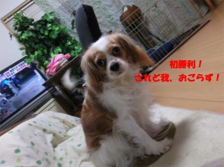 008_convert_20120217170917[1]