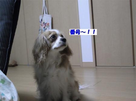 01_convert_20120229151557[1]