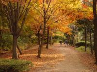 茅ヶ崎公園の秋