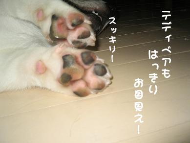 20061004212821.jpg