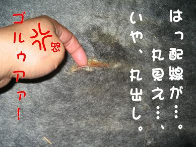 20061013135253.jpg