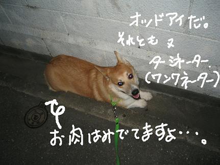 20061020193124.jpg