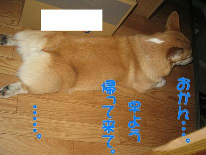 20070124204105.jpg