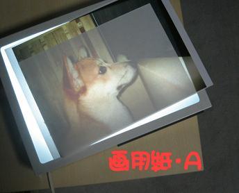 20070304173929.jpg