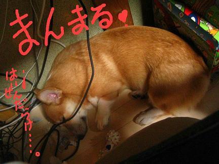 IMG_4759-2.jpg