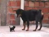 スッゲェ~根性の子ネコ
