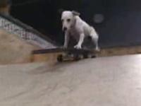スケボー犬・・・