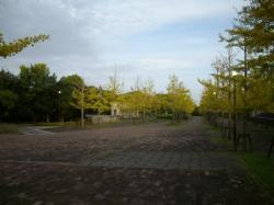 IMGP1011.jpg
