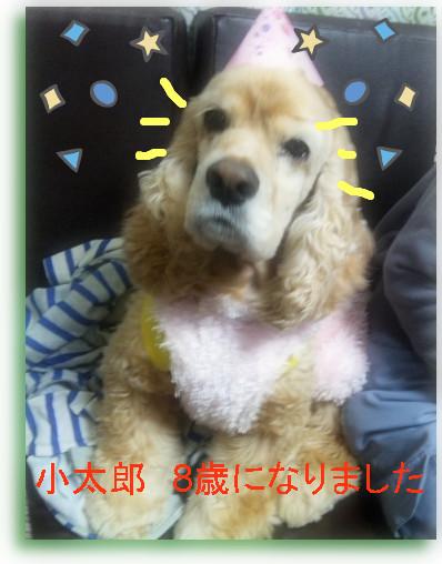 happi-小太1