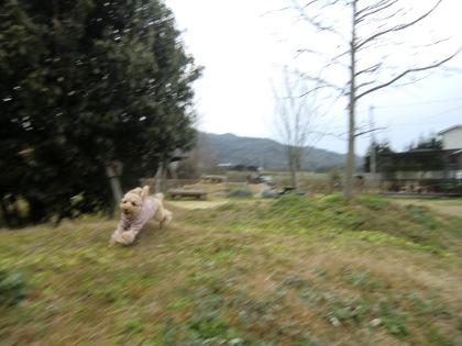 CIMG3627_20120125165030.jpg