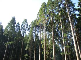 okayamanoki191124c.jpg