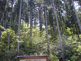 reihokunoyama1107a.jpg