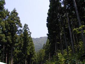 tosanoyama1107a.jpg