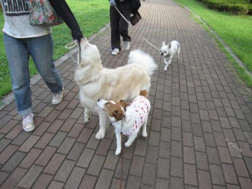 2011長岡公園444
