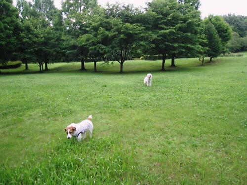2011長岡公園448