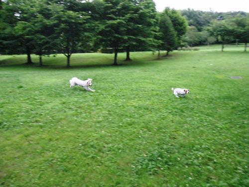 2011長岡公園452