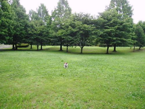 2011長岡公園454