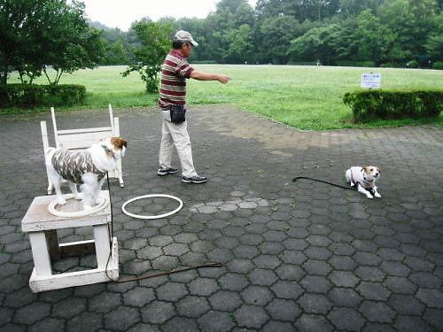 2011長岡公園459