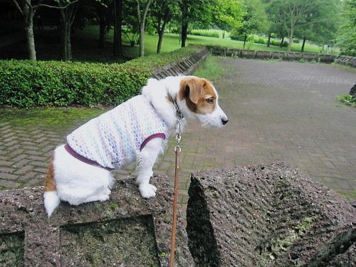 2011長岡公園464